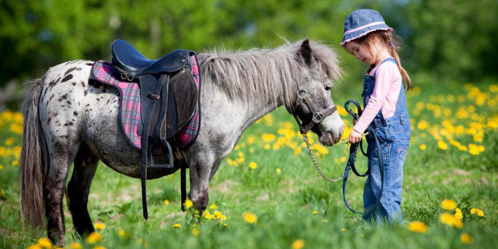 Der Traum vom eigenen Pferd kann nicht immer erfüllt werden. Die Alternative ist ein Spielpferd.