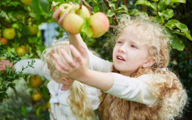 Herbst Aktivität mit Kindern Äpfel pflücken