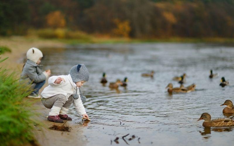 Herbst Aktivität mit Kindern Enten füttern